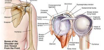 vall_anatomia